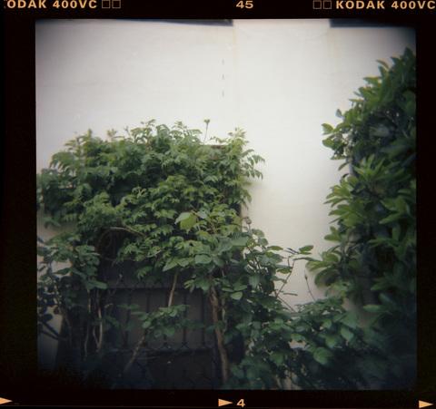 20070421_Kodak400VC_04.jpg