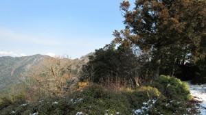 木立に遮られてちょっとしか見えないが、鬼ヶ城山を望む