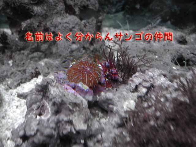 サンゴの仲間