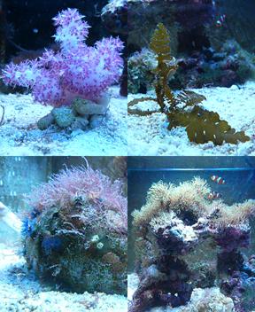 20081123_coral.jpg