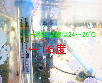 16度を示す温度計