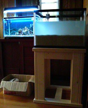 セットアップしたDSBと絶好調の実験水槽